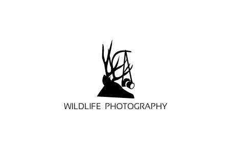 custom-photography-logo-design-wildlife